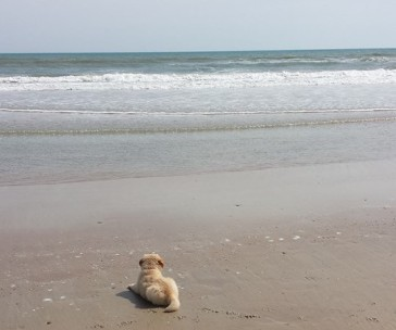 First trip to the beach