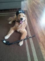 Oshie with Hocket Gear