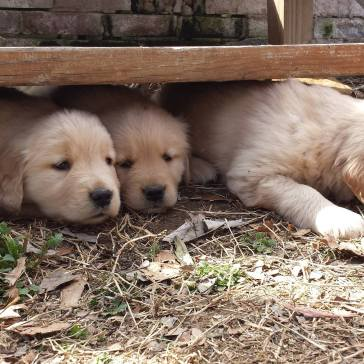 Oshie and two of his siblings the week before he came home.