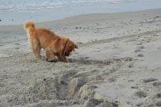 oshie beach 2