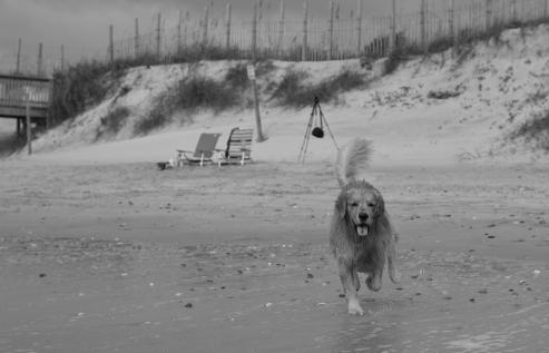 oshie beach