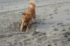 oshie beach3