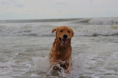 oshie beach4