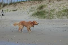 oshie beach5