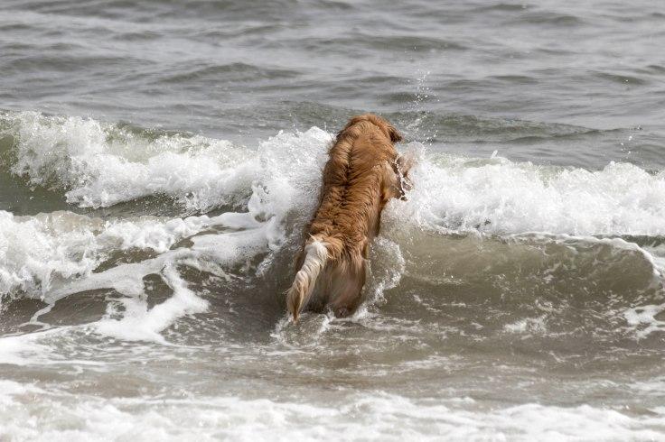 Oshie_beach-1