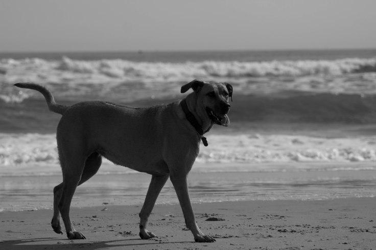 Oshie_beach-17