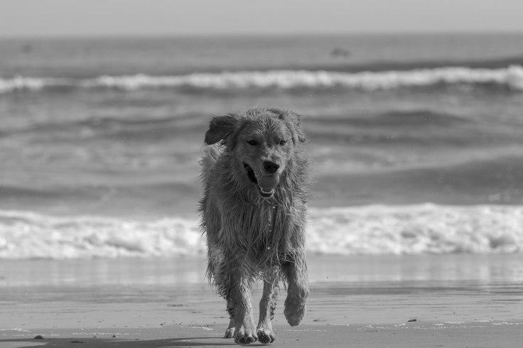 Oshie_beach-18