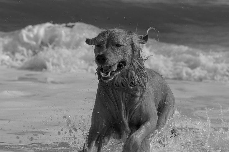 Oshie_beach-21