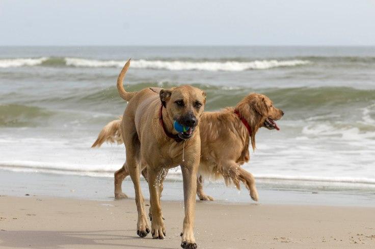 Oshie_beach-9