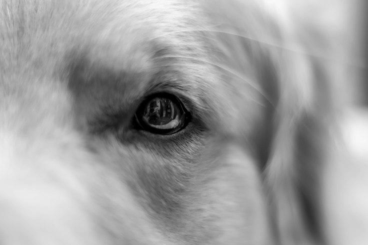 oshie_eye (1 of 1)