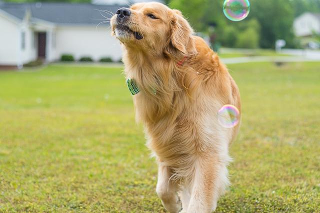 Oshie_Bubbles-2