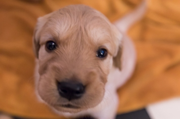 puppies_small-5