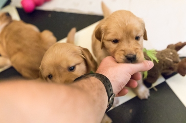 puppies_small2-5