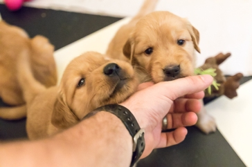 puppies_small2-6