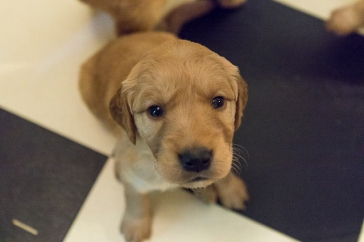 puppies_small2