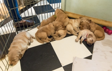 puppies_small3-4