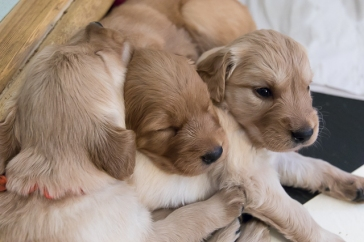 puppies_small3-5