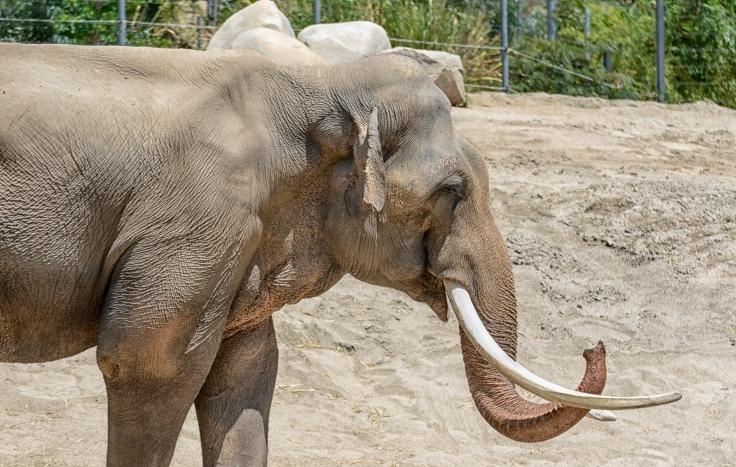 LA Zoo Elephant2.jpg