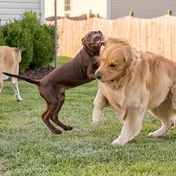 Attack cousin Oshie!