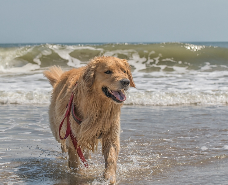 Oshie beach.jpg